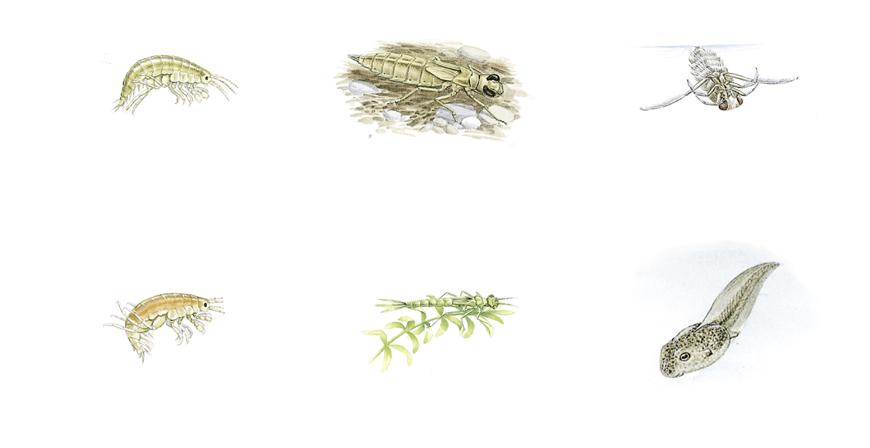 shrimps & bugs