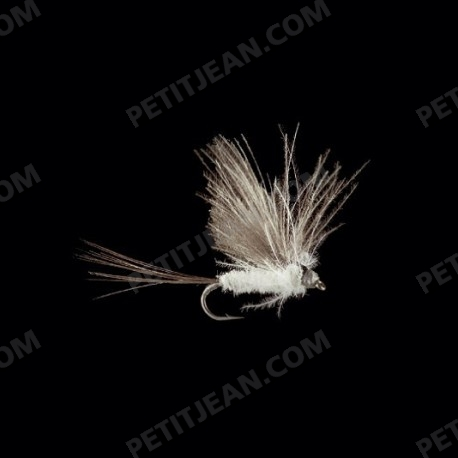 MayFlies CDC MP22