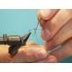 Dubbing Needle